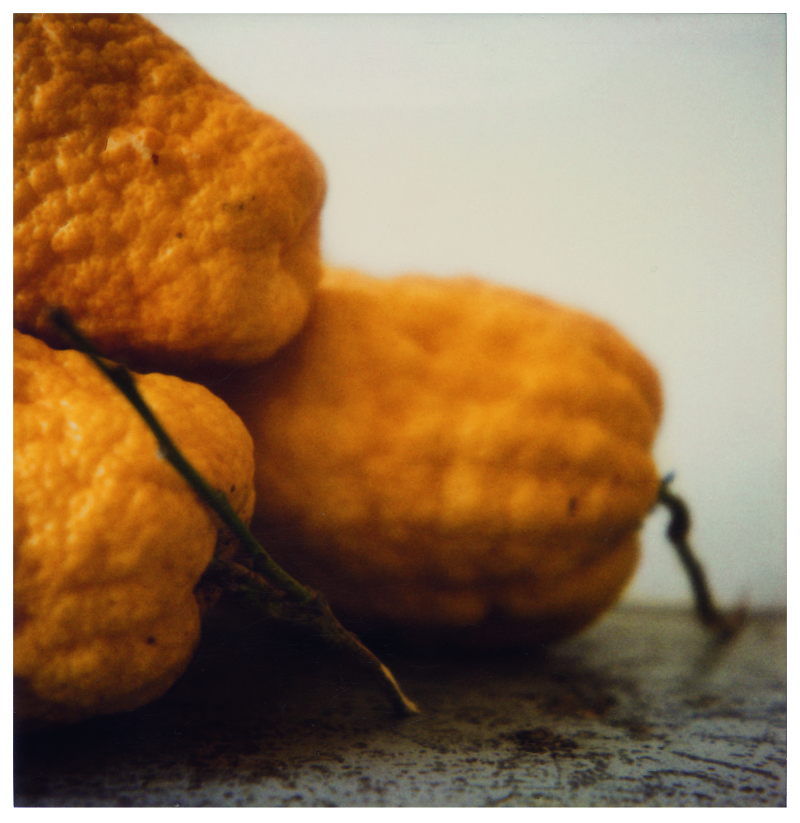 Citrons_VII  - Cy Twombly - Centre Pombidou