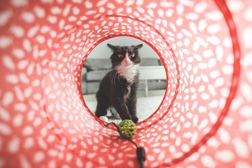 Chiens et chats - Museum d'histoire naturelle Toulouse